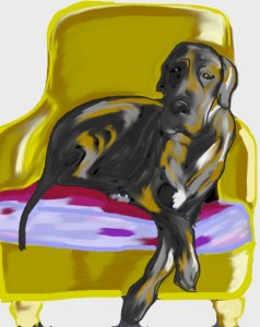 Meshach the Great Dane in his chair