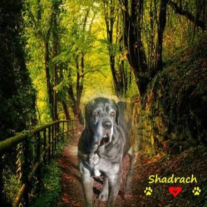 Farewell to Neo Mastiff