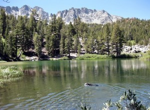 Snookie-Swimming-in-Emerald-Lake-2010-08-14-300x220