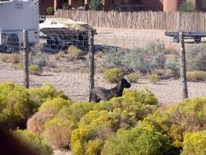 Watching_Neighbor_Dogs2
