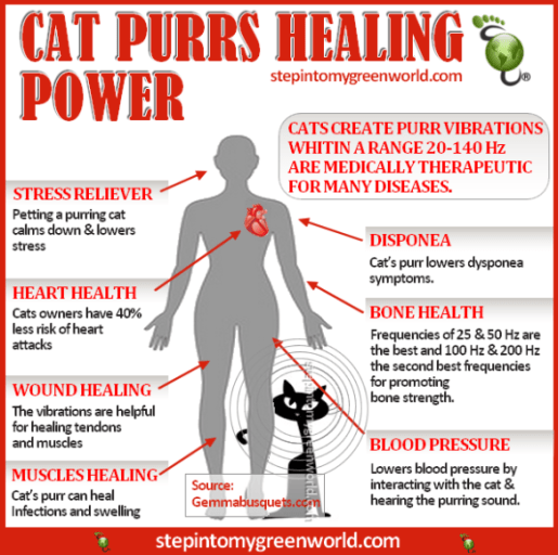 the healing purr of a cat