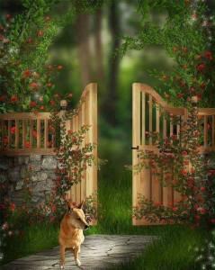 Carolina Dog at the Pearly Gates