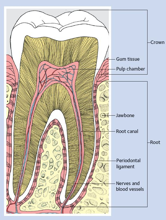 What Causes Cavities and Tooth Decay | Aspen Dental