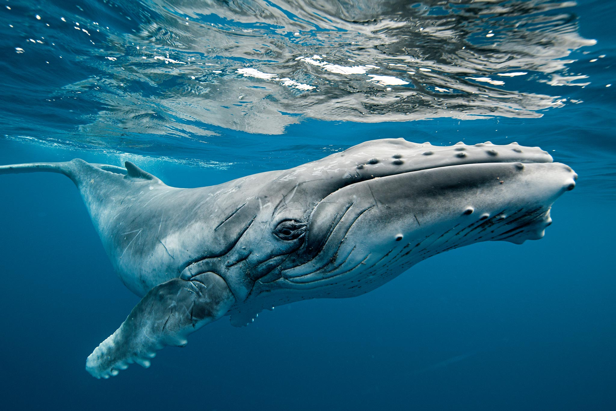 One million is also referred to as one thousand thousand, and a comma is used to separate the digits. Biomimicry, And What Humpback Whales & Electric