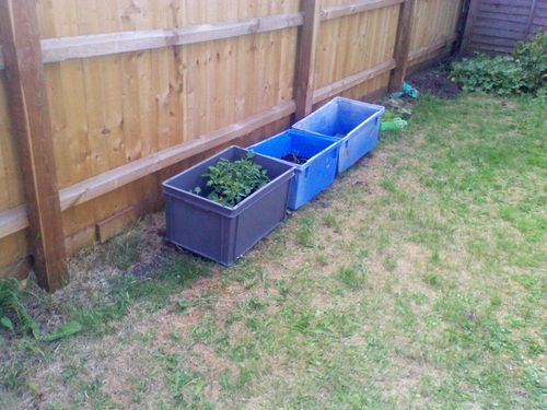 Plants growing in plastic boxes in the garden