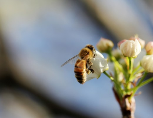 selective focus of a bee on a flower