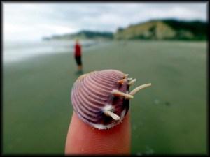 shell on finger