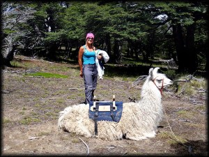 autumn with llama chalten