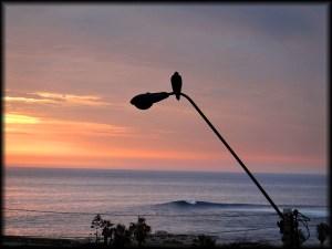 view el buey surf sunset bird photo