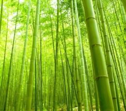 Filosofi Hidup Pohon Bambu