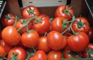 بسبب حشرة ضارة .. روسيا تعيد للمغرب 211 طن من الطماطم