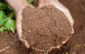 لاحول ولا قوة إلا بالله..واشنطن الأمريكية تصدر قانونا يسمح بتحويل جثامين الموتى إلى تربة للزراعة