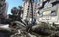 اقتلاع أشجار النخيل من شارع الأميرة لالة عائشة يغضب سكان القنيطرة