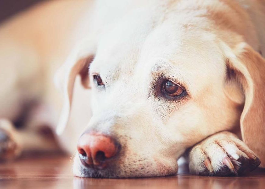 Dog food recalled due to potentially harmful levels of vitamin D