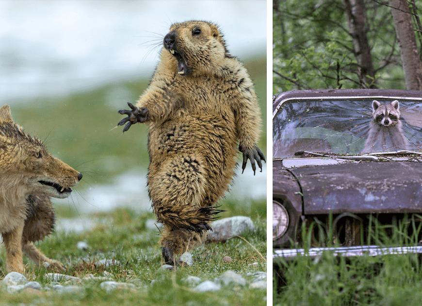 The 35 Best Wildlife Photos Of 2019