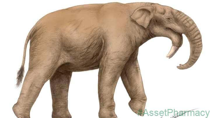 Humans Evolved In Animal Communities Dominated By Enormous Herbivores