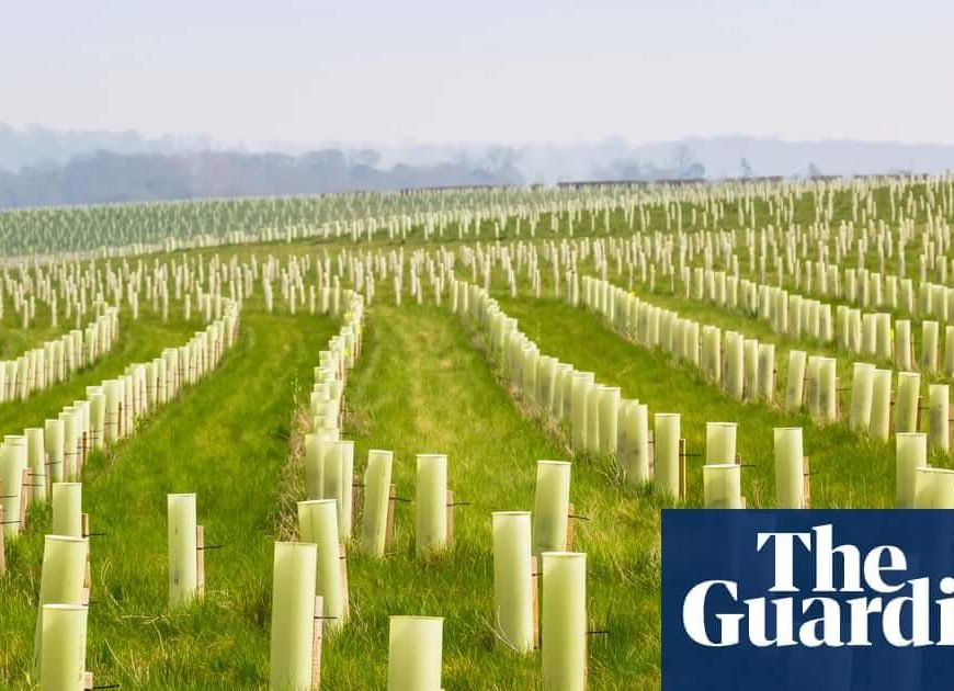 Make big polluters pay for mass tree planting, officials say