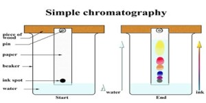 Chromatography  Assignment Point