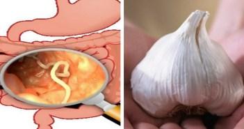 verme no estomago visto com lupa e bulbo de alho