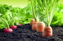 Produtos orgânicos