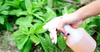 spray plantas