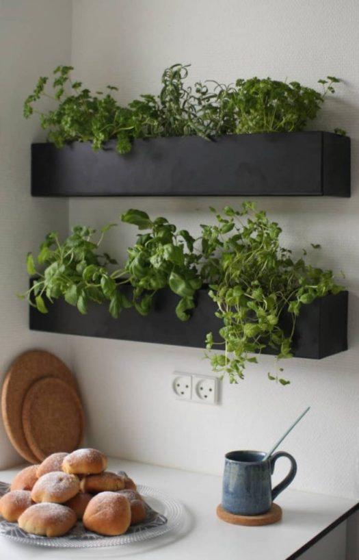 caixas ervas aromaticas