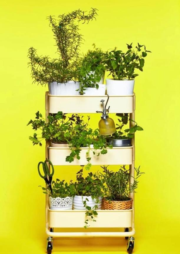 ervas aromáticas cozinha