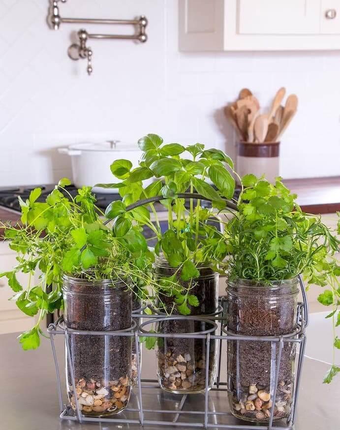 ervas aromaticas vidro