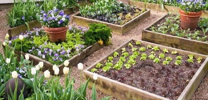 canteiros elevados de vegetais