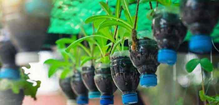 garrafas pet penduradas com vegetais