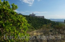Bosco Assisi_Foto © Andrea Angelucci (1)