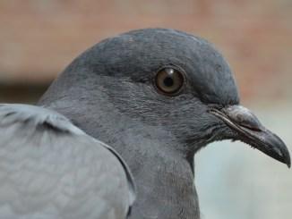 Petrignano, cittadini risolvono problema dei piccioni