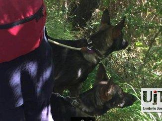 Pellegrinaggio coi lupi, Zoe e Francesco, lungo il sentiero Francescano