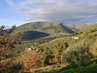 Fascia olivata Assisi-Spoleto, Candidatura programma Giahs – Fao