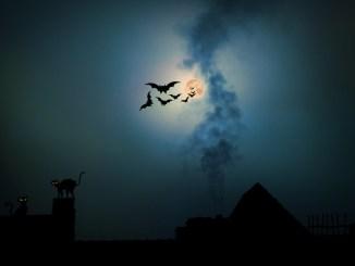 Una notte alla scoperta dei pipistrelli al Bosco di San Francesco