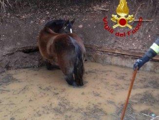 Recuperato dai vigili del fuoco il cavallo caduto in una cisterna