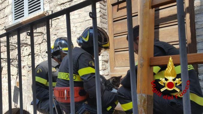 """Gatto """"spericolato 2"""" la saga continua, altro micio salvato dai Vigili del fuoco"""