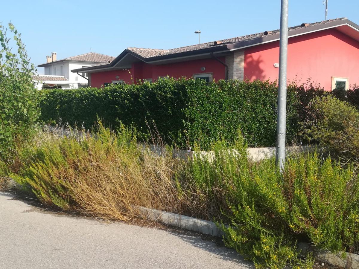 In via Campo Grande a Petrignano di Assisi c'è il bosco, proteste