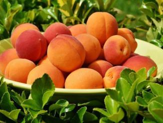 Agricoltura amatoriale ricreativa via agli spostamenti lettera di Assisi Domani alla Regione Umbria