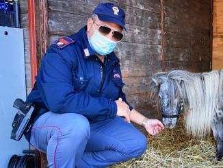 Cavallina pony rubata a Vicenza, Josefien, era a Tordandrea dio Assisi