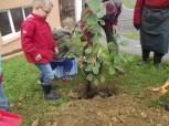 cecl-automne-2014-plantation-noisetier0012