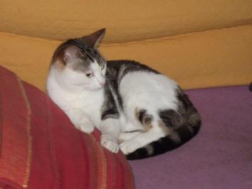 Marguerite 5