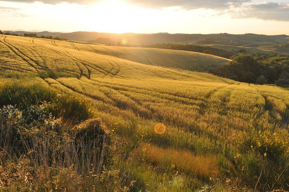 L'Associazione Produttori Colline Toscane, un baluardo dell'eccellenza toscana
