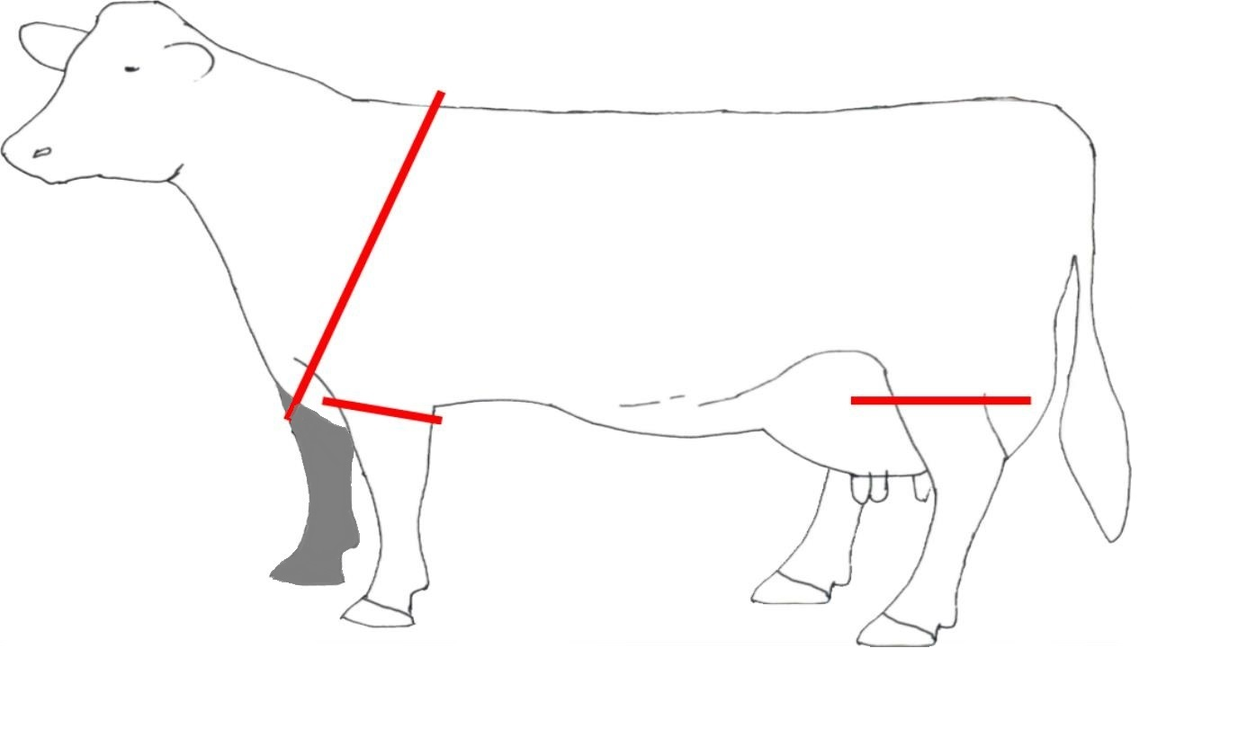 Hair Loss Lesions And Swellings In Dairy Cows Assurewel