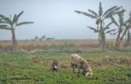 تعزيز الأمن الغذائي في شرق المتوسط وغربه