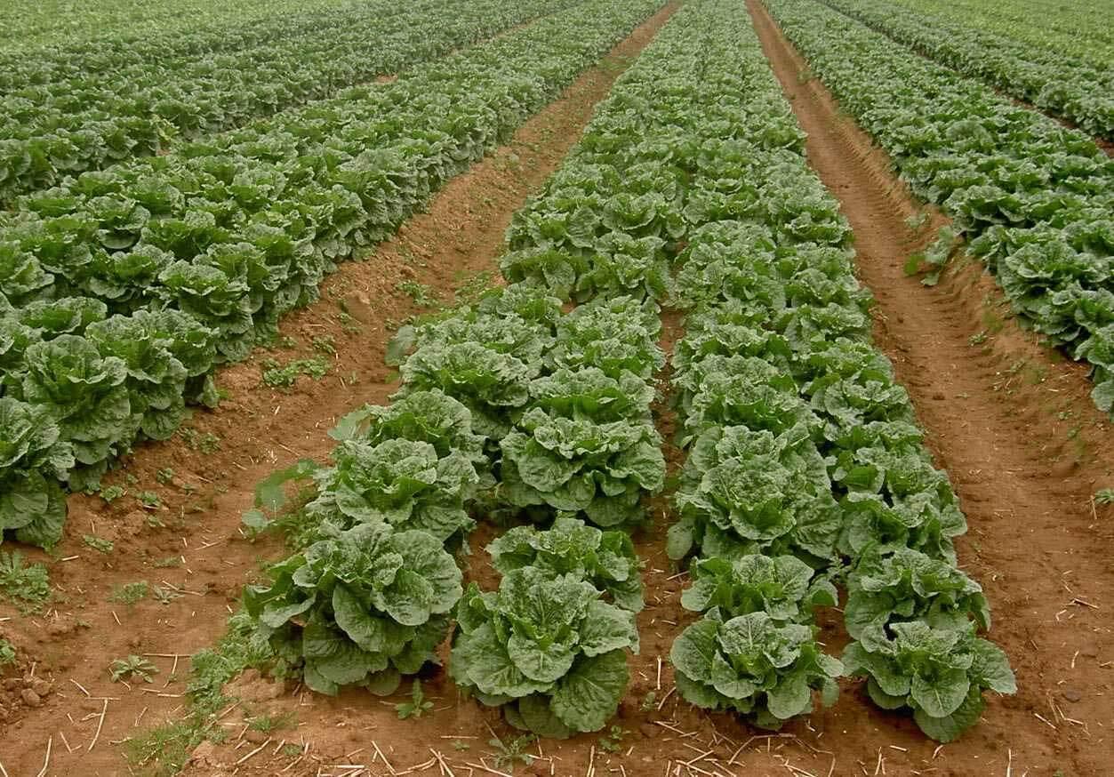 الجزائر تُحدِّث زراعتها لتحقيق الأمن الغذائي