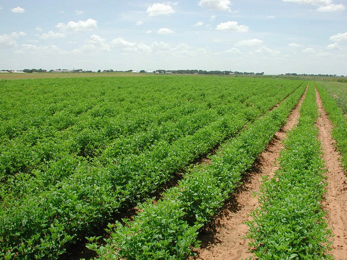 أبوظبي تستثمر في الزراعة المُستدامة والتكنولوجيا الجديدة لتعزيز الإنتاج الزراعي المحلي