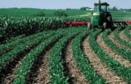 زيادة الإنتاج الزراعي تُقَرِّب الجزائر من تحقيق الأمن الغذائي
