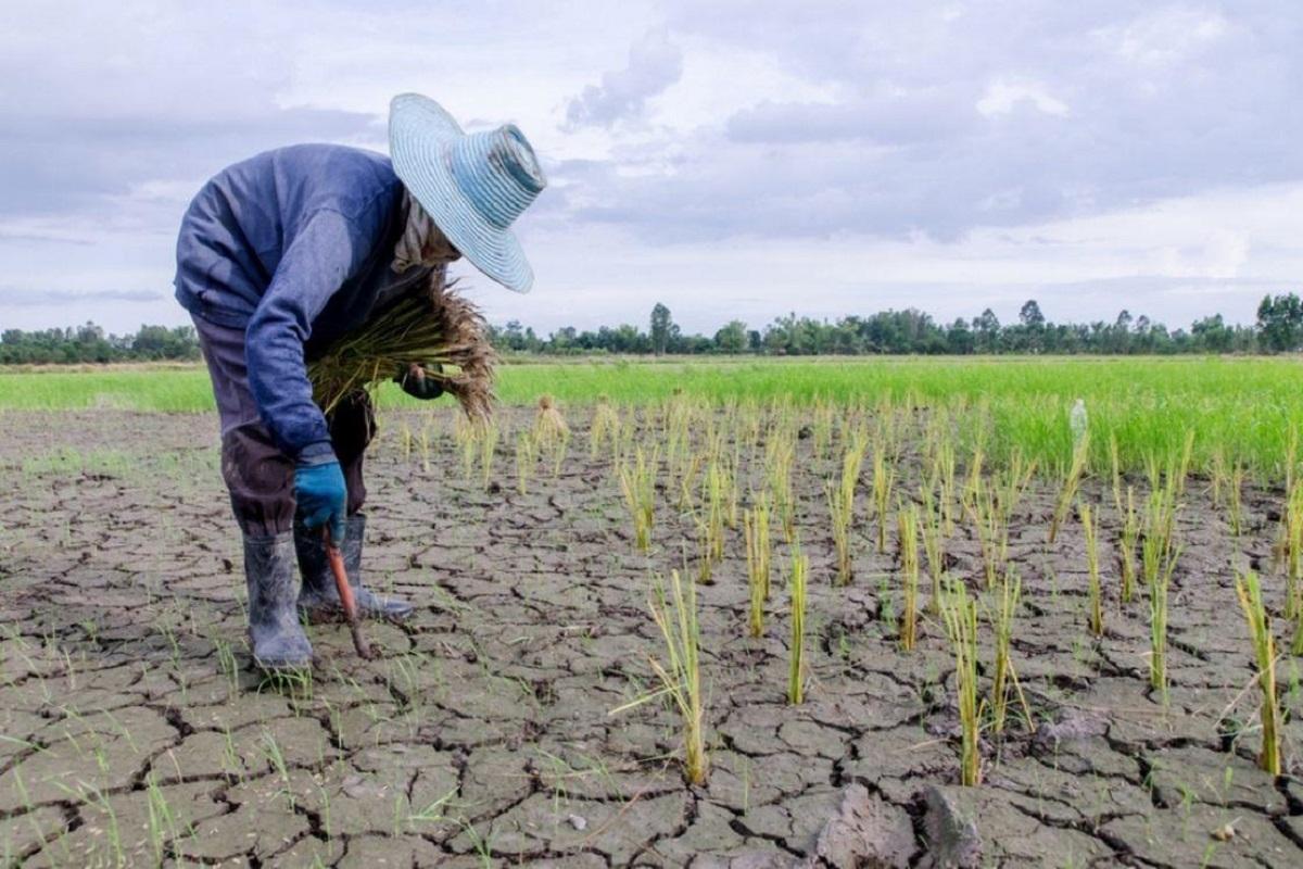 أزمة غذاء عالمية تُهدّد حالياً أكثر من مليار نسمة وفي المستقبل القريب البشرية برمّتها
