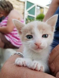 kitten kini cats